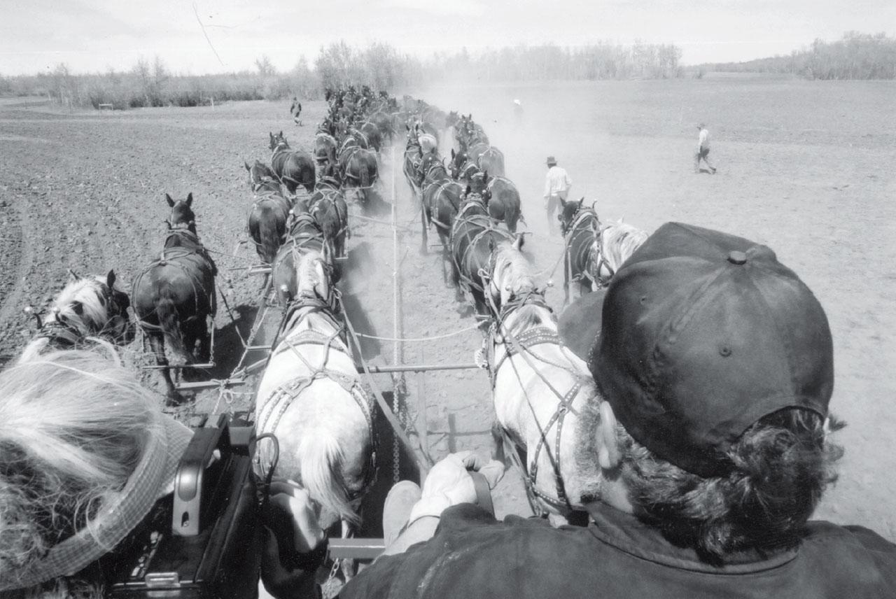 World Record Percheron Draft Horse Hitch