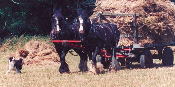 Jonathon and Fiona Waterer British Horsefarmers