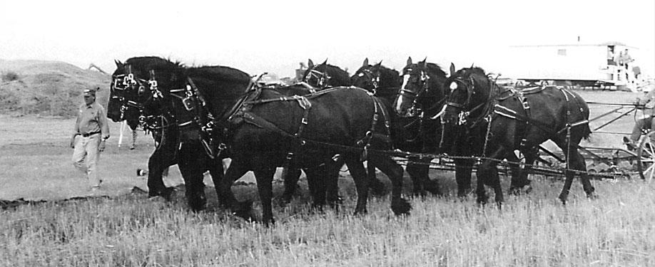 Alberta Pioneer Heritage