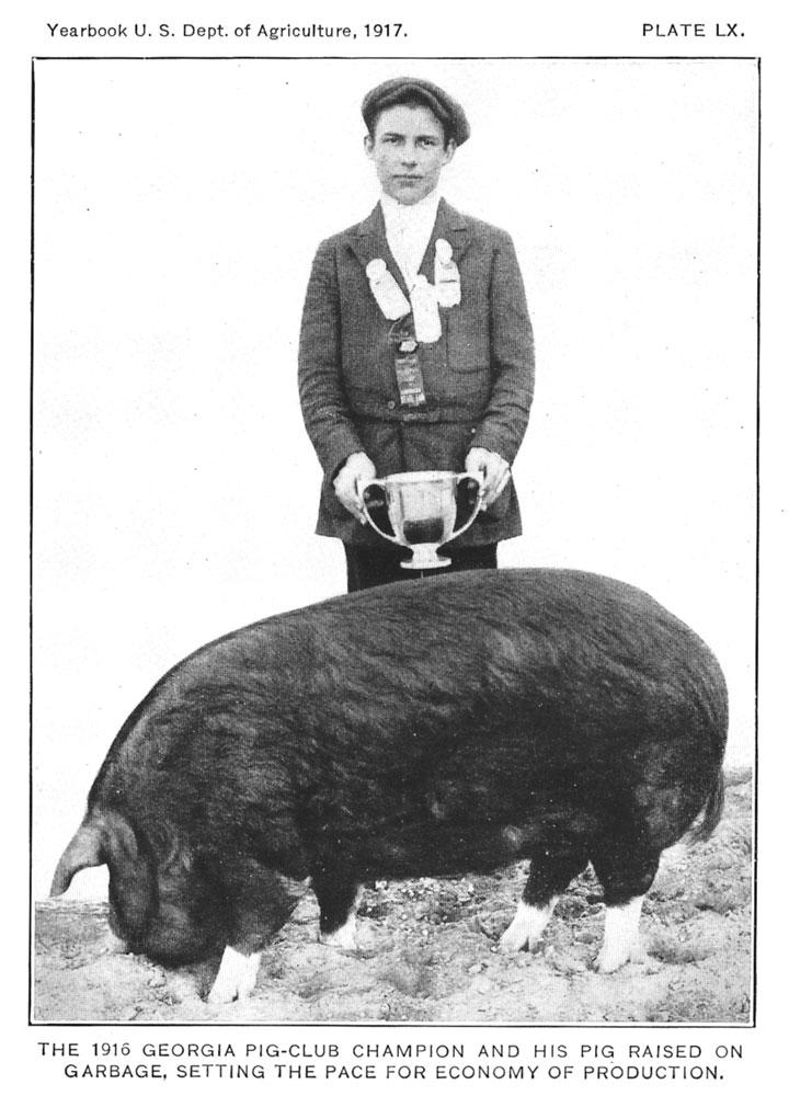Olde Tyme Swine