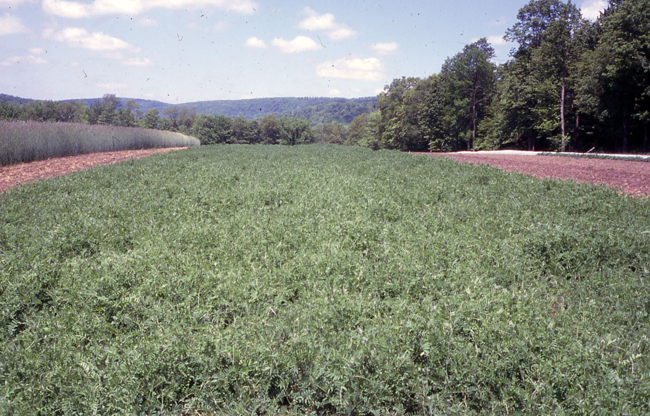 CQ The Organic Cropping Systems Experiment at Cornell