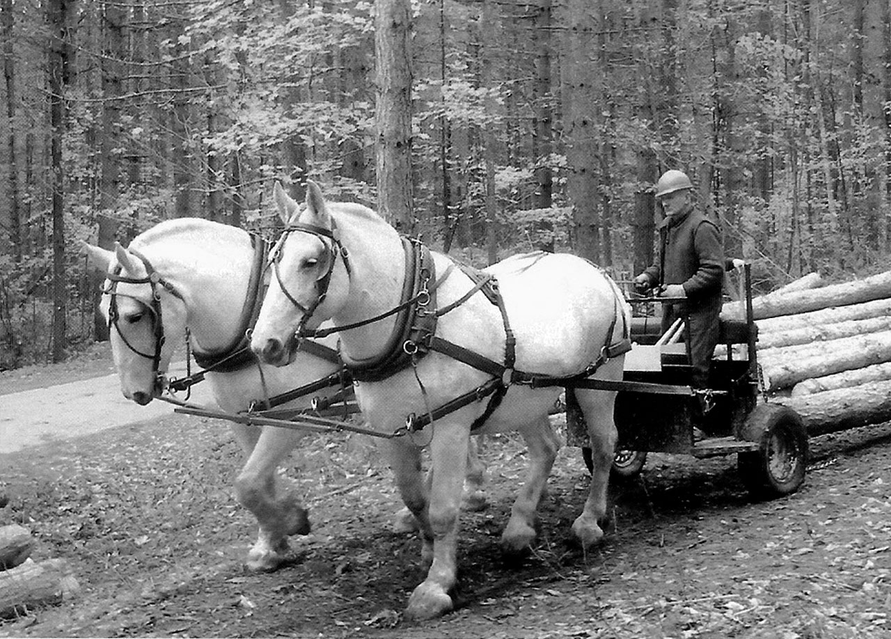 Lessons to be Learned Horses Logging Honor