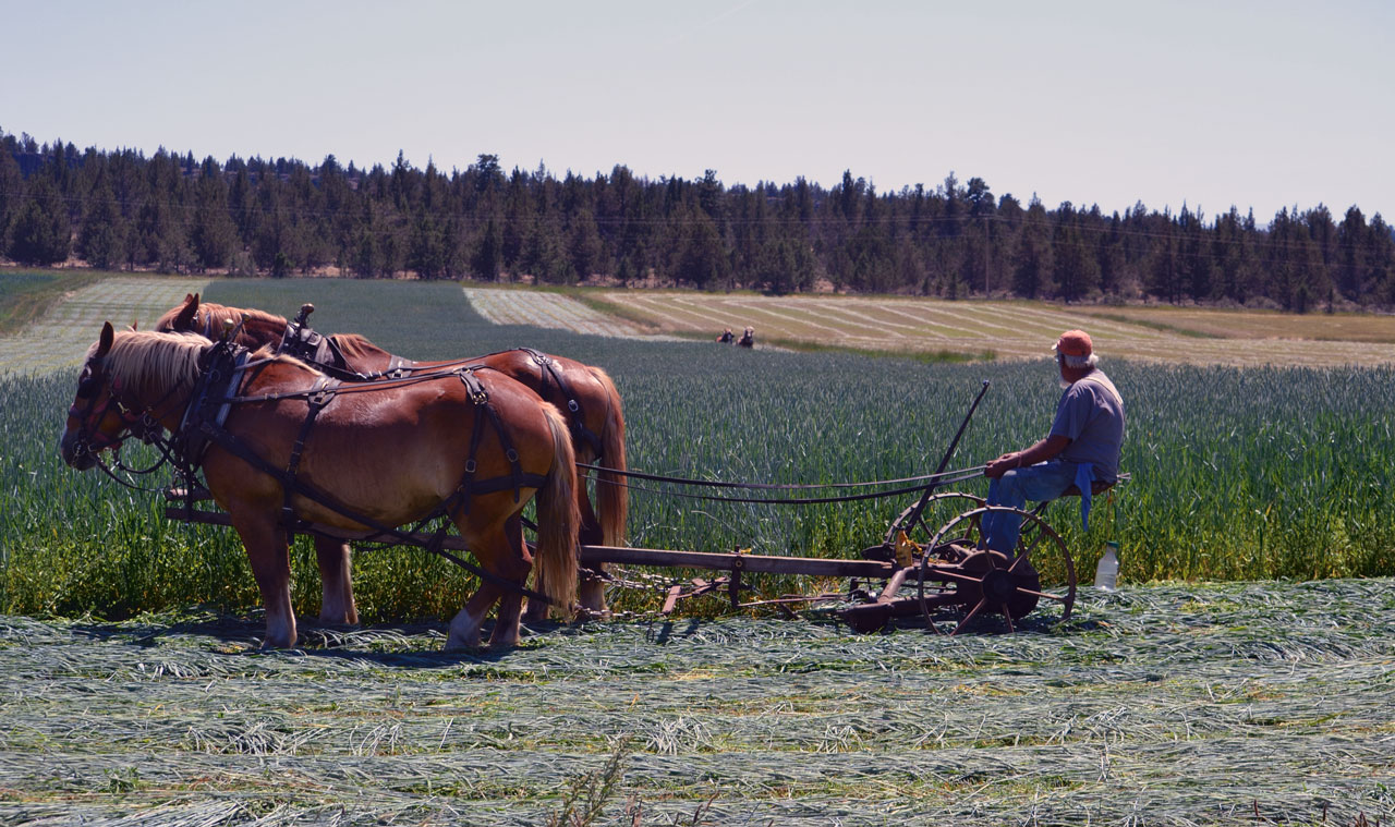 Mowing Triticale on Singing Horse Ranch