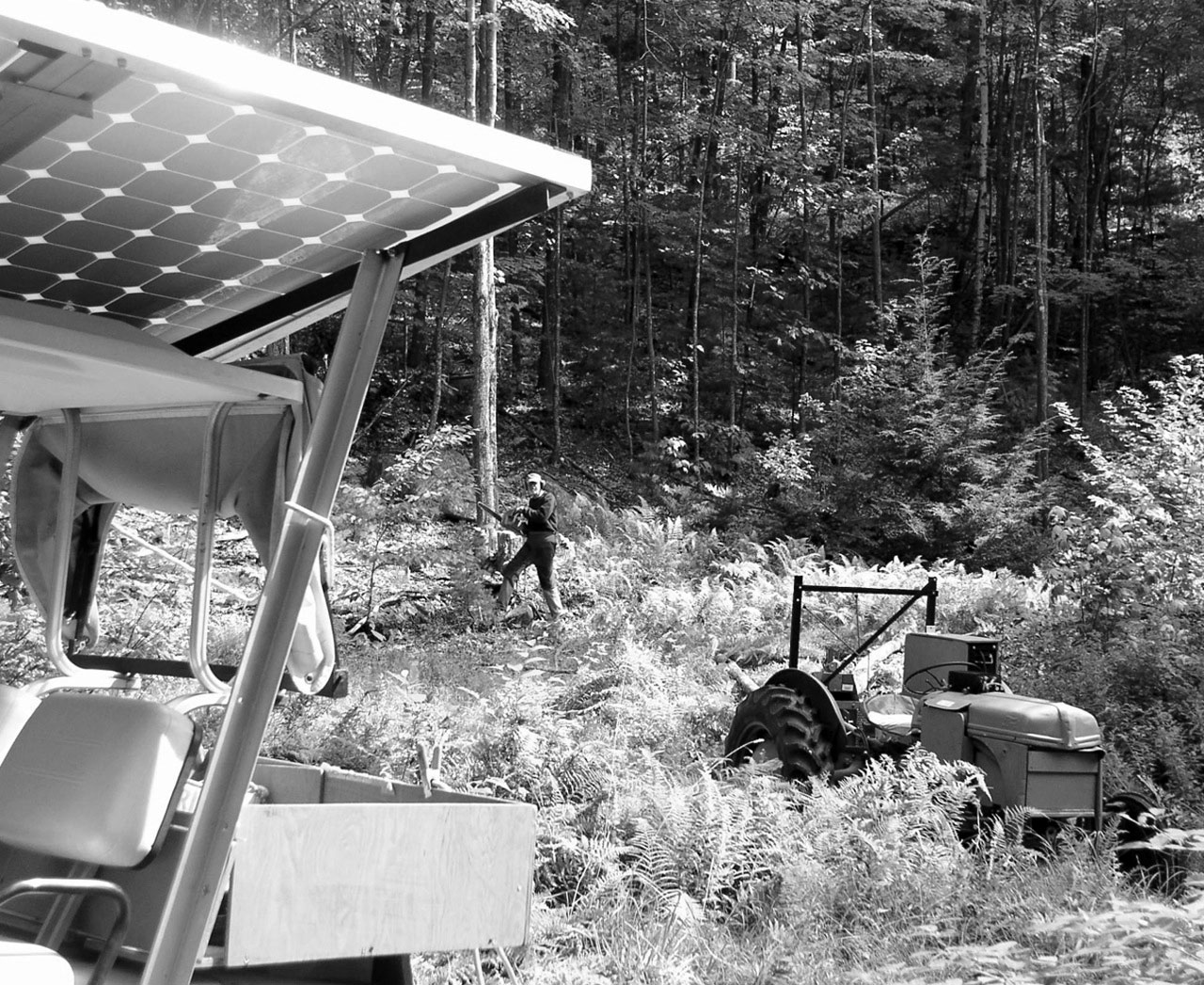 Solar Woodlot Operation Shines in Waterford