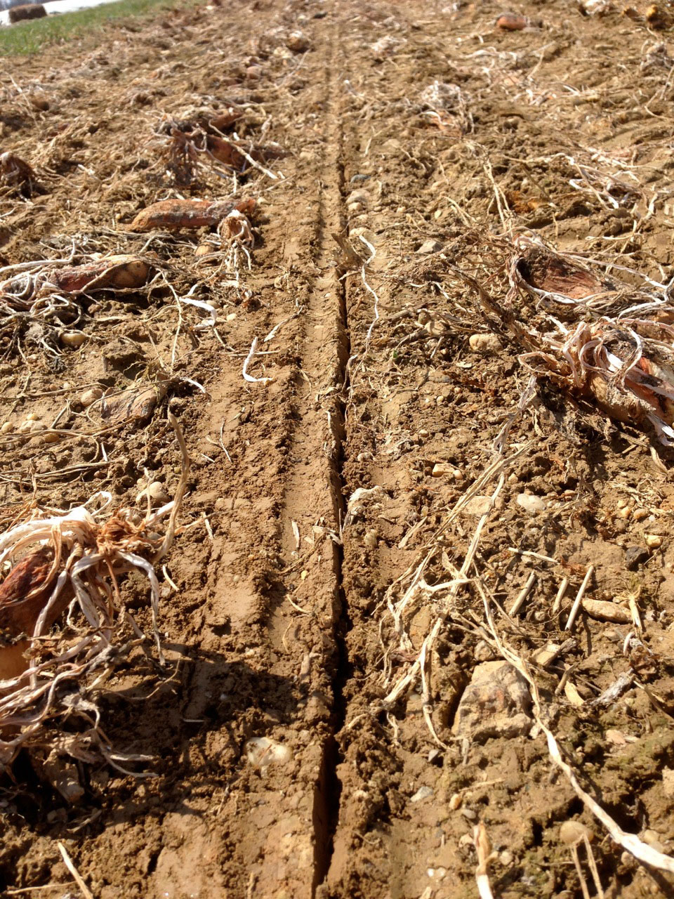 Cultivating Questions No-till No-herbicide Planting of Spring Vegetables Using Low Residue Winter-killed Cover Crops