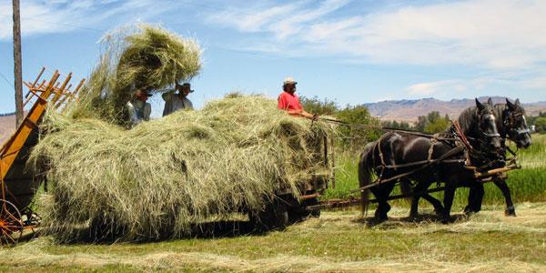 Making Hay at Oak Tree Ranch