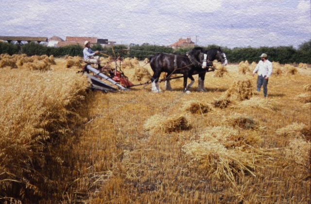 The Rhythm of Horses in the Landscape