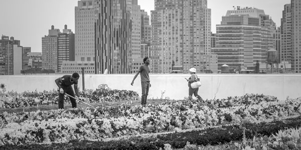 Rooftop Farming Provides Solace & Opportunity