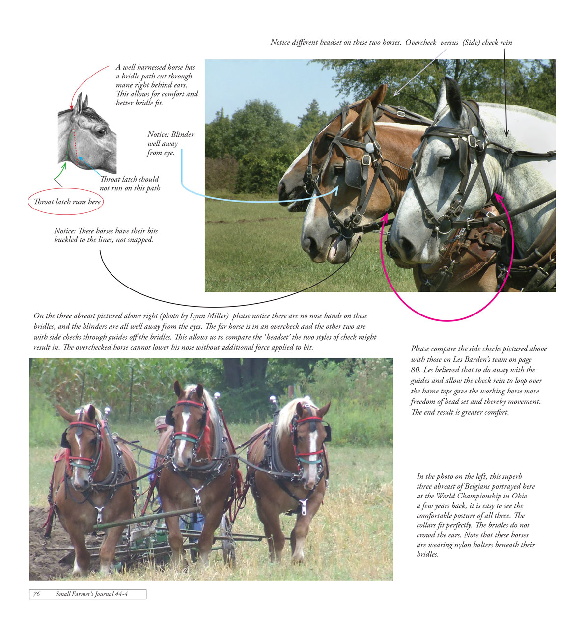 Work Horse and Mule Harness Design and Function Part 2
