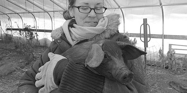 Large Black Hog Piglets from off the Internet