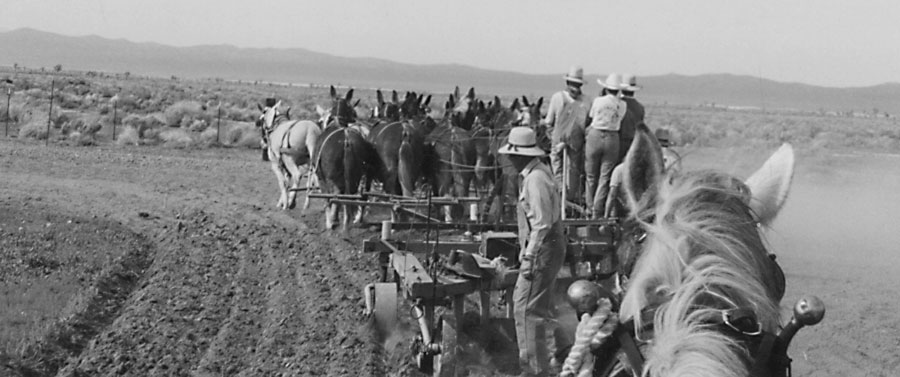 Plowing Big with Mules