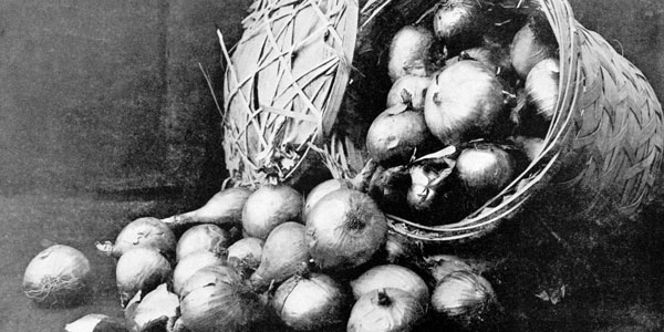 Onion Culture