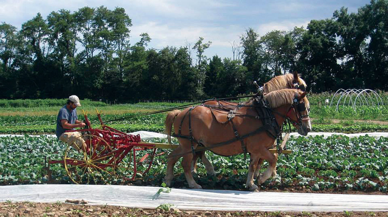 Financial Benchmarks for Horse-Powered Vegetable Farms