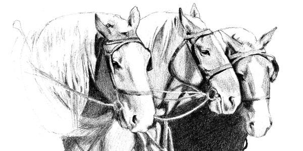 I Work Horses