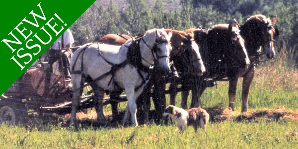Prevent Heat Stress in Hard-Working Horses