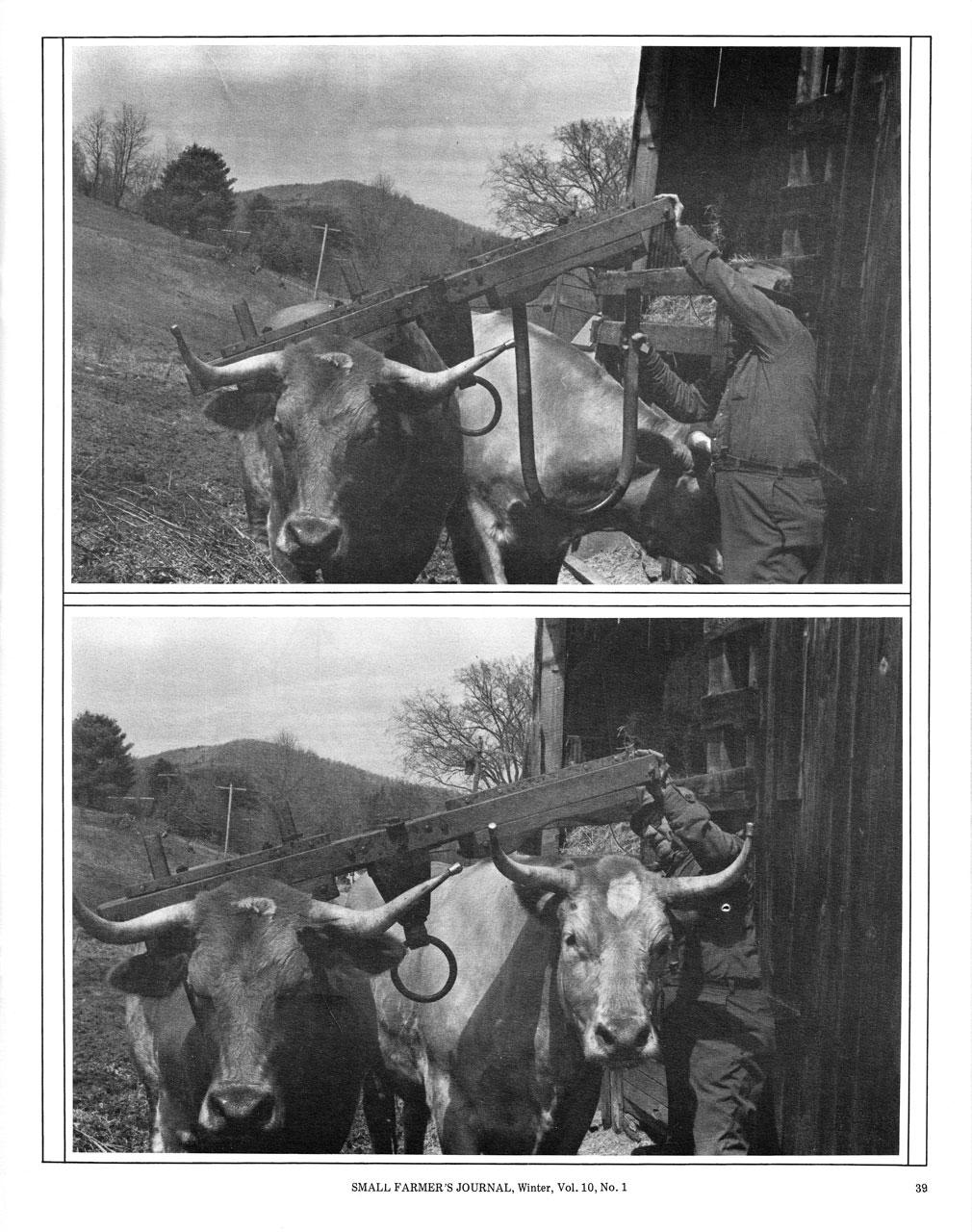 Putting On the Ox Yoke