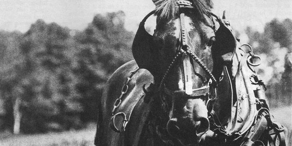 Fescue Toxicosis in Horses