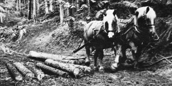 Idaho Horse Logging Short Course 1985
